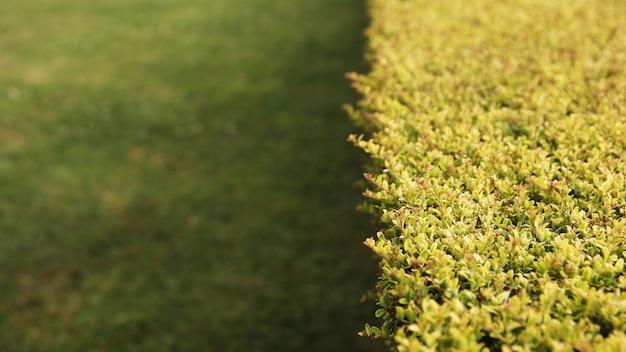 Hoher winkelschuss der büsche auf einem grasbedeckten rasen Kostenlose Fotos