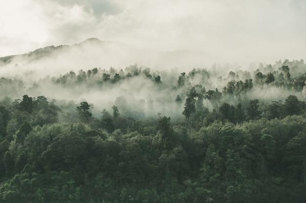 Hoher winkelschuss eines schönen waldes mit vielen grünen bäumen, die im nebel in neuseeland eingehüllt werden Kostenlose Fotos