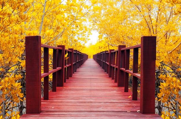 Holzbrücke & herbstwald. Premium Fotos