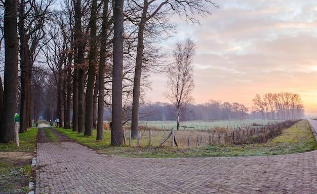 Holzbrücke und pad in den wald in den niederlanden, Premium Fotos