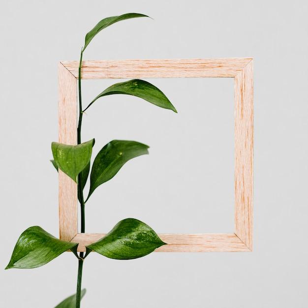 Holzrahmen mit grünem blatt Kostenlose Fotos