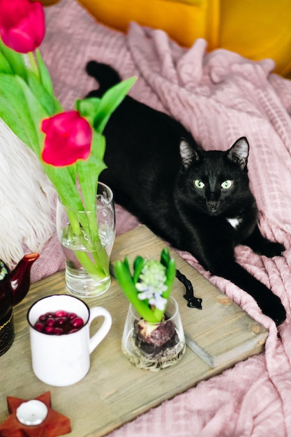 Holztablett mit tee, frühlingsblumen und schwarzer katze auf einem gemütlichen bett, vertikales foto. selektiver fokus. hochwertiges foto Premium Fotos