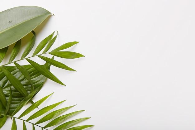 Horizontale aufnahme von grünen pflanzen auf der linken seite des fotos. leeren sie den platz gegen weiß für ihre informationen oder werbung Kostenlose Fotos