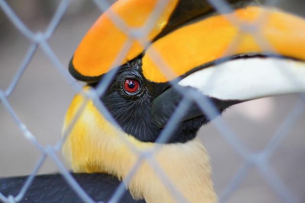 Hornbills im käfig Premium Fotos