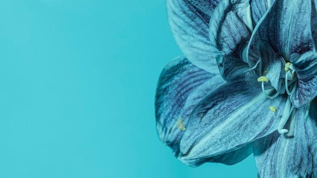 Hübsche makroblaue blume Kostenlose Fotos