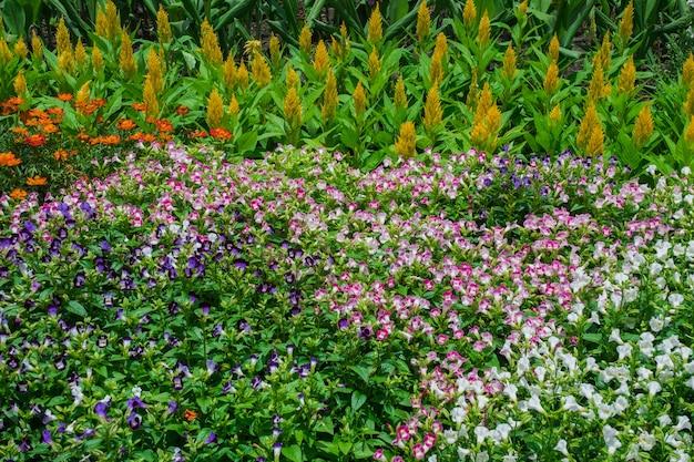 Hübscher manikürter blumengarten mit buntem Premium Fotos