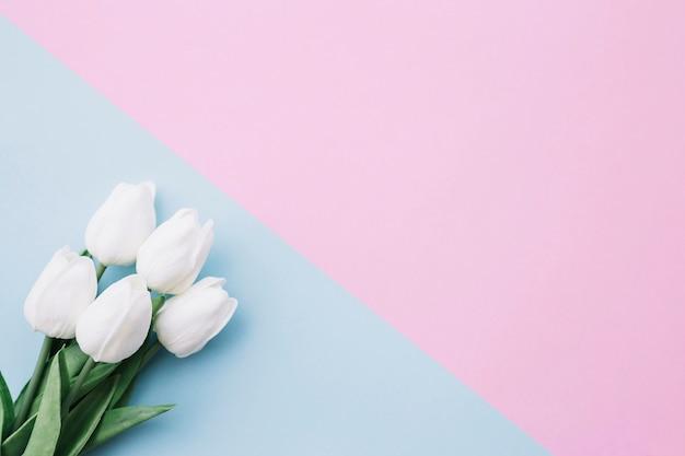 Hübscher tulpenblumenstrauß auf blauem und rosa hintergrund mit raum auf dem recht Kostenlose Fotos