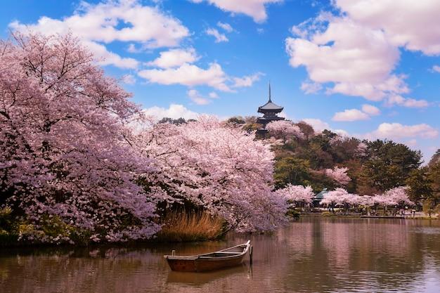 Hübscher und reizender rosa kirschblüten-tapetenhintergrund, tokio, japan, weichzeichner Premium Fotos