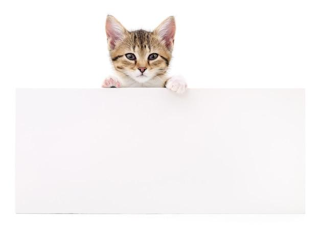 Hübsches kätzchen, das aus einem leeren zeichen heraus späht, isoliert Premium Fotos