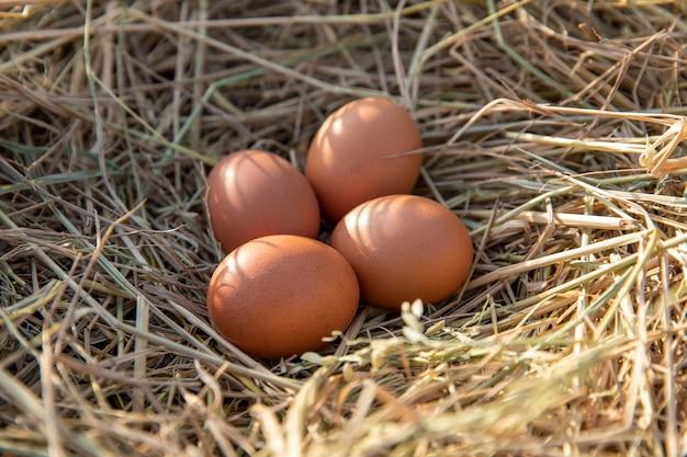Hühnereien in einem hühnernest auf reisstroh Premium Fotos