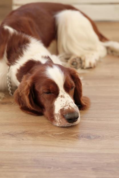 Hund auf dem boden Kostenlose Fotos