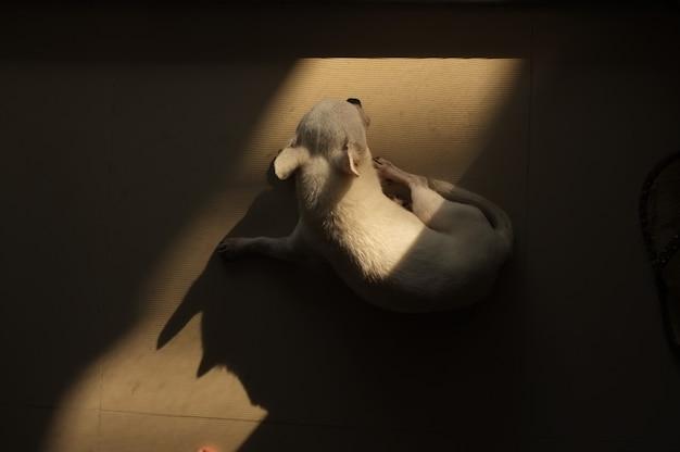 Hund, der auf dem boden an der quadratischen stelle des warmen sonnenlichts von der tür schläft Premium Fotos