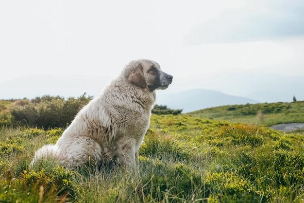 Hund, der auf dem grünen hügel im sommer sitzt Premium Fotos