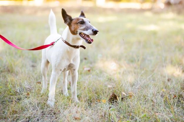 Hund, der im park mit leine steht Kostenlose Fotos