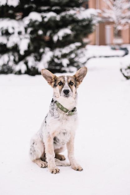 Hund, der im winterwald sitzt Premium Fotos
