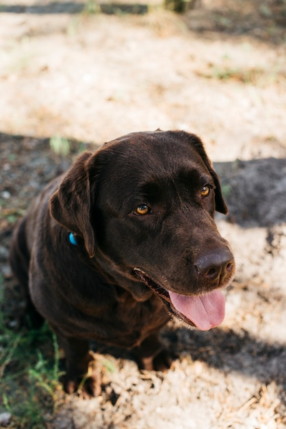 Hund, der in der natur sich entspannt Kostenlose Fotos