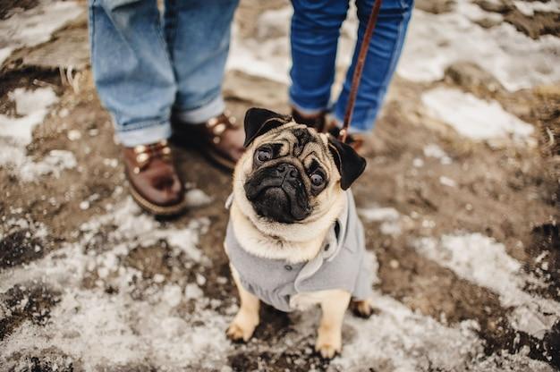 Hund, der mit dem eigentümer im freien im winter verschneit wird. schönes paar im winterfeld auf einem spaziergang mit dem hund. Premium Fotos