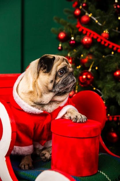 Hund des hohen winkels, der sankt-kostüm trägt Kostenlose Fotos
