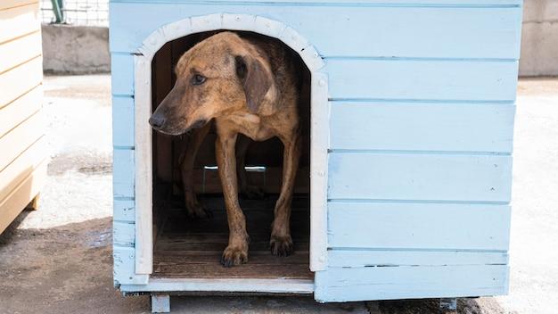 Hund im haus, der darauf wartet, von jemandem adoptiert zu werden Kostenlose Fotos
