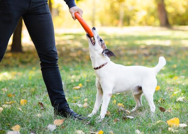 Hund im park, der mit inhaber spielt Kostenlose Fotos