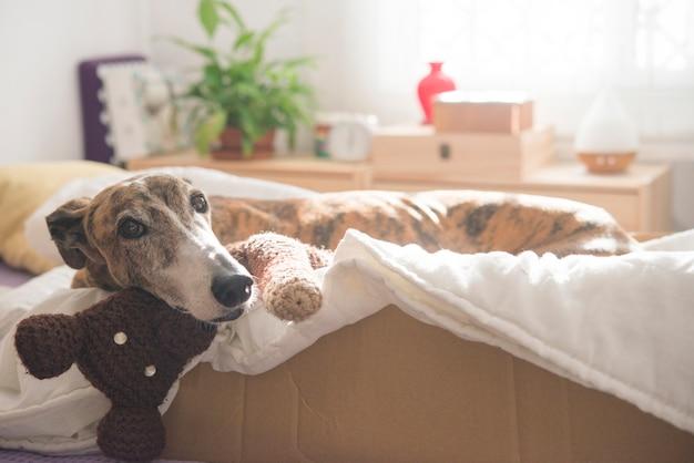 Hund im schlafzimmer entspannen Premium Fotos