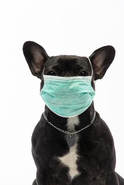 Hund Die Maske