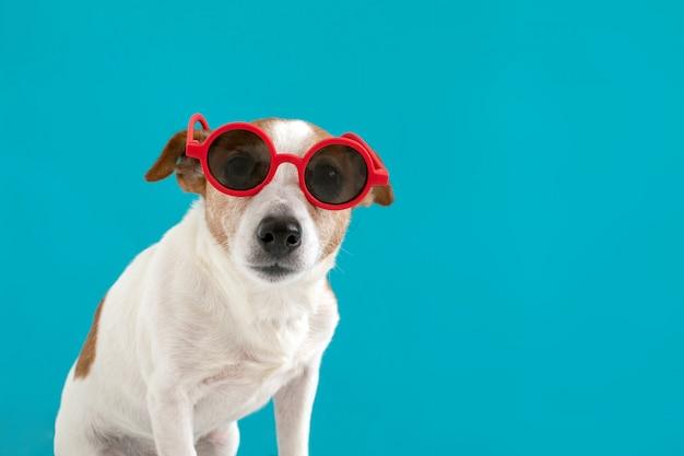 Hund in roter sonnenbrille Premium Fotos