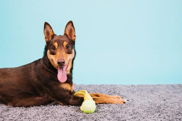 Hund mit tennisball Kostenlose Fotos