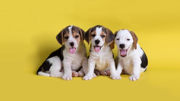 Hund, nett von der gruppe des spürhundwelpensitzens und -c $ keuchens Kostenlose Fotos