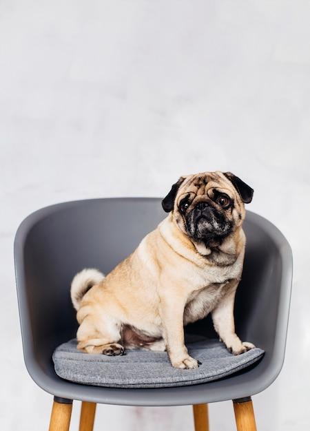 Hund sitzt auf dem stuhl Kostenlose Fotos