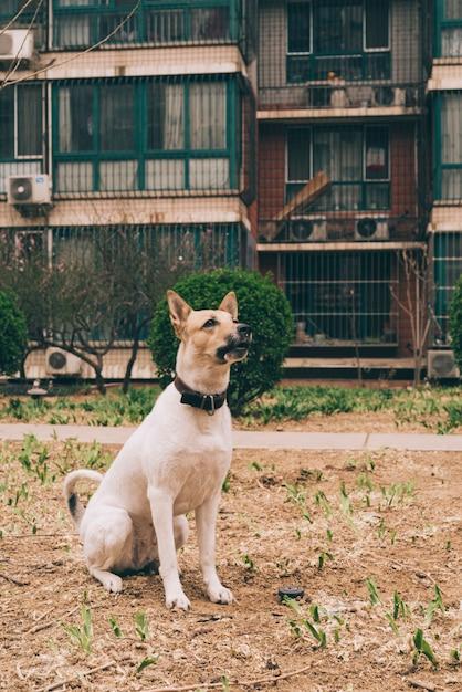 Hund sitzt auf rasen Kostenlose Fotos