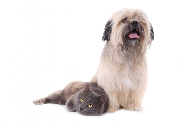 Hund und katze getrennt auf einem weißen hintergrund Premium Fotos