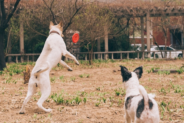 Hunde, die mit frisbee spielen Kostenlose Fotos