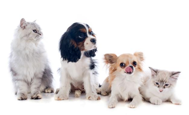 Hunde und katzen Premium Fotos