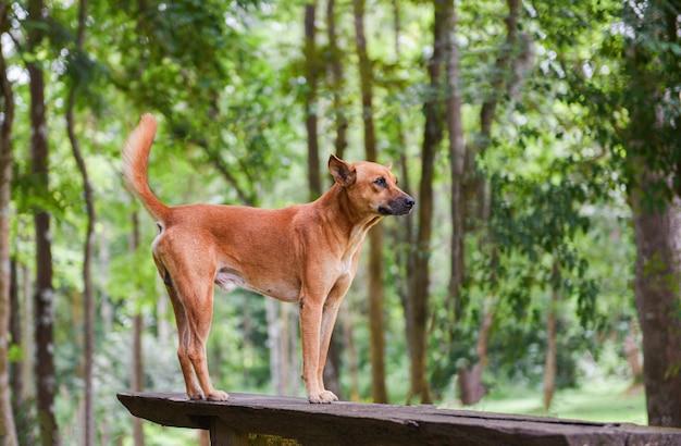 Hundepark, der auf dem grünen baumwald des holzes und der natur steht Premium Fotos