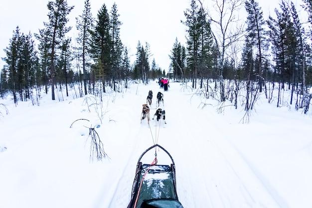 Hundeschlitten mit schlittenhunden in der schönen landschaft Premium Fotos