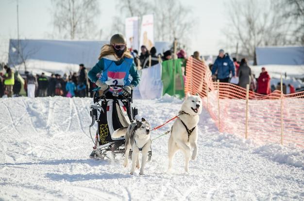 Hundeschlittenrennen. frauenmusher und schlittenhundhundeteam Premium Fotos