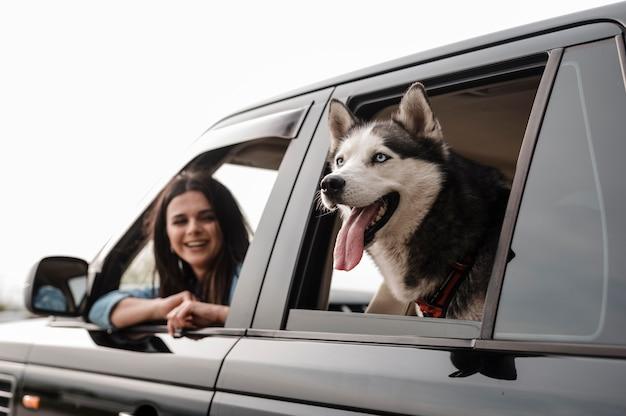 Husky späht seinen kopf aus dem fenster, während er mit der frau mit dem auto fährt Premium Fotos