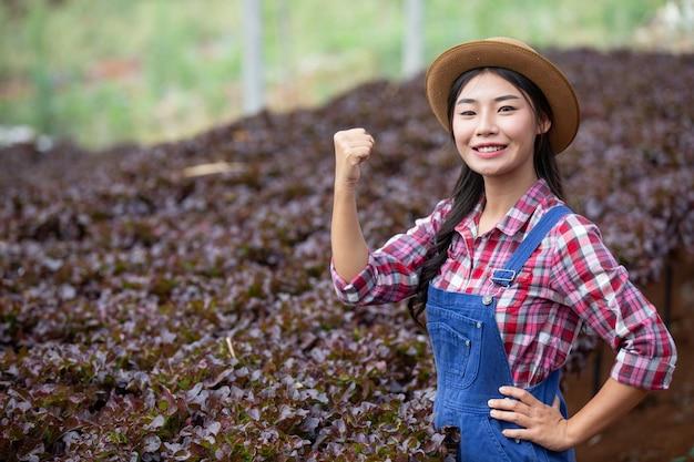 Hydrokultur-system, gemüse und kräuter pflanzen, ohne den boden für die gesundheit zu verwenden Kostenlose Fotos