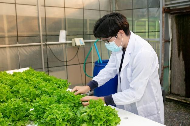 Hydroponikfarm, wissenschaftler oder arbeiter testen und sammeln daten von salat-bio-hydroponik. Premium Fotos