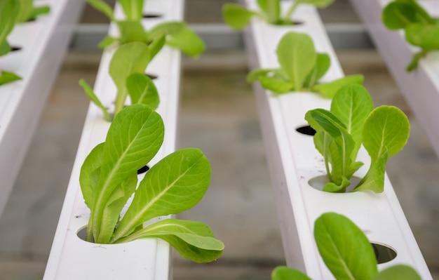 Hydroponische gemüseplantage Premium Fotos