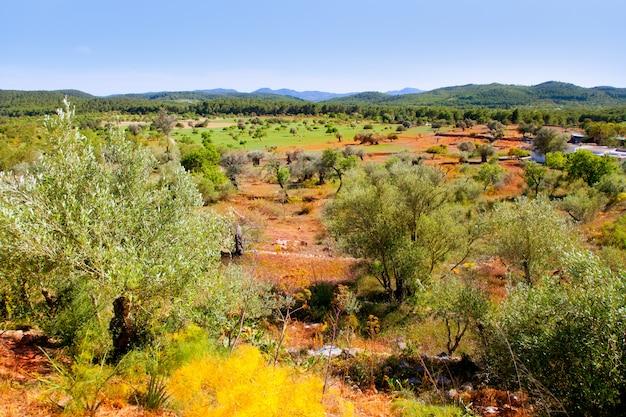 Ibiza insellandschaft mit landwirtschaftsfeldern Premium Fotos