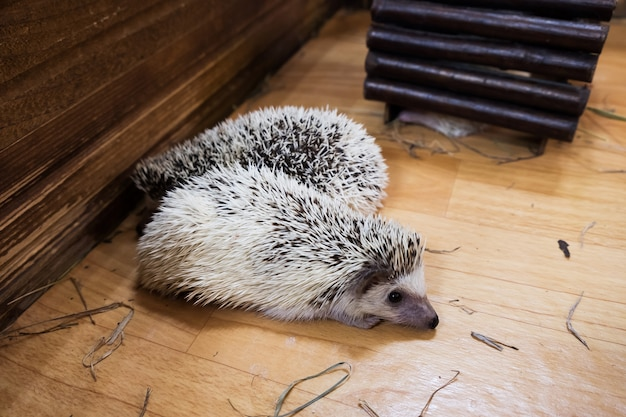 Igel schlafen in häusern im zoo Premium Fotos