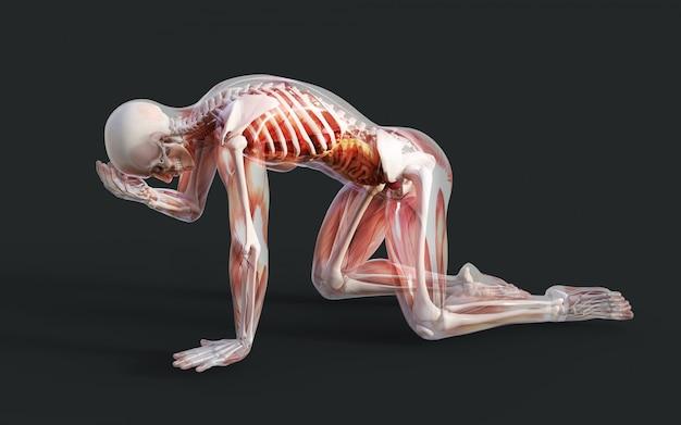 Illustration 3d eines männlichen skeleton muskel-systems, des knochens und des verdauungssystems mit beschneidungspfad Premium Fotos