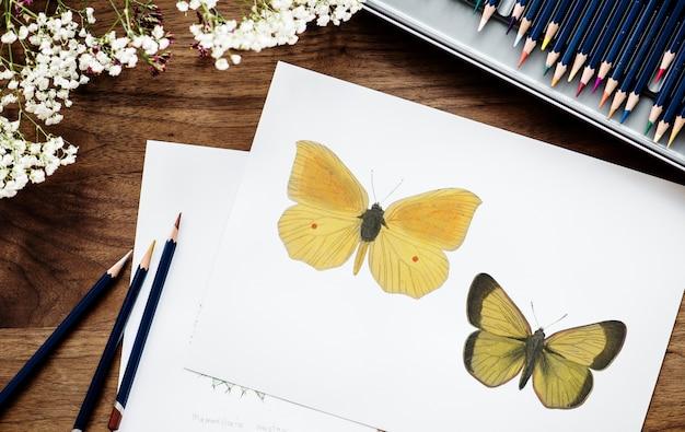 Illustrator färbung schmetterling Kostenlose Fotos