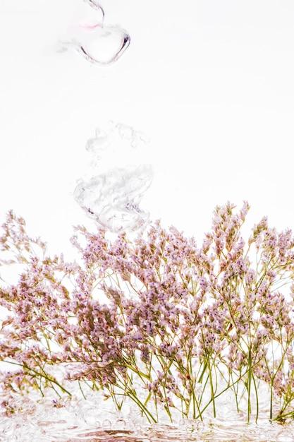 Immergrün fällt ins wasser Kostenlose Fotos