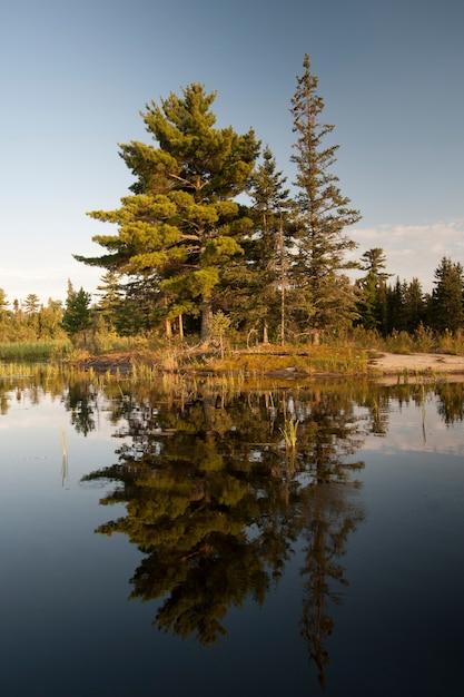 Immergrüne bäume entlang der küstenlinie am lake of the woods, ontario Premium Fotos
