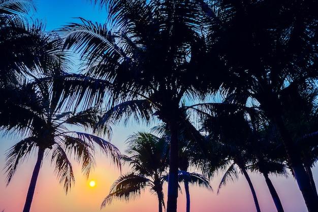 Indien insel horizon muster palm Kostenlose Fotos