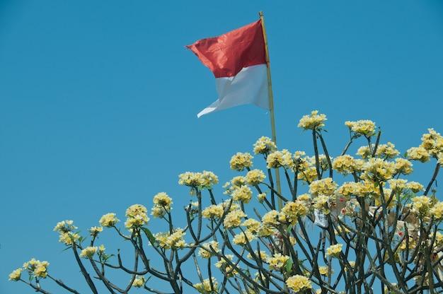 Indonesisches staatsflaggefliegen auf gelbem blumenbaum und blauem himmel Premium Fotos
