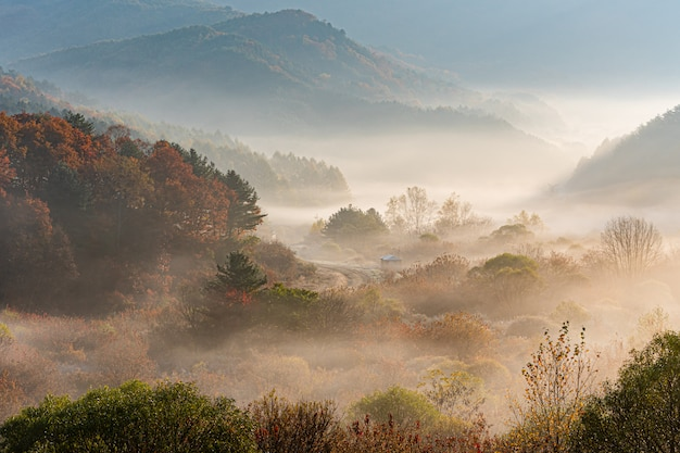 Inje-gun geheimer garten, nebel und sonnenaufgang, republik korea Premium Fotos
